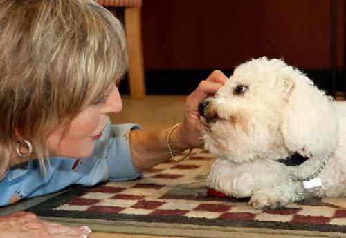 Dairydell Dog Training Blog 11