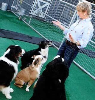 Dairydell Dog Training Blog 10
