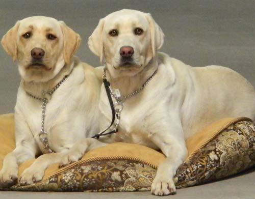 Dairydell Dog Training Blog 12