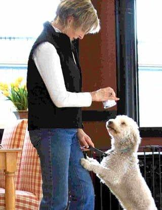 Dairydell Dog Training Blog 7