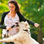 Dairydell Dog Training Blog 6