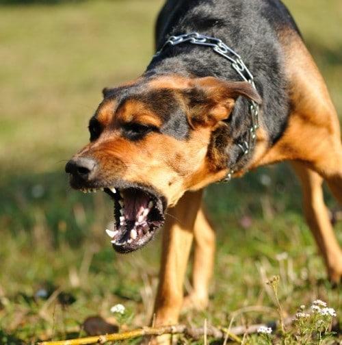 Dairydell Dog Training Blog 5