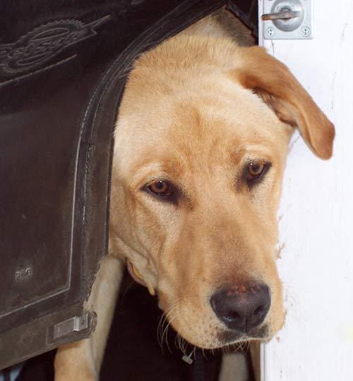 Dairydell Dog Training Blog 8