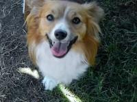 Dairydell Dog Training Blog 9