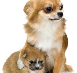 Dairydell Dog Training Blog 2