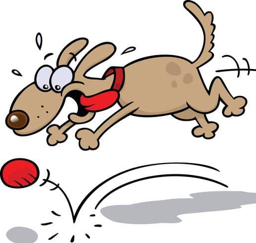 Dairydell Dog Training Blog 4
