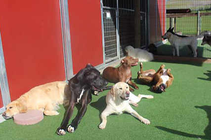 doggie daycare dogs enjoying dog boarding services in the fresh air