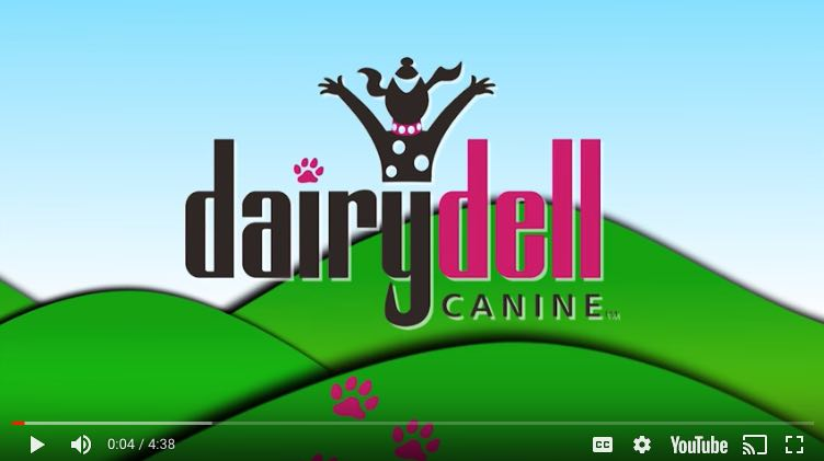 dog boarding & training video title for Dairydell Canine