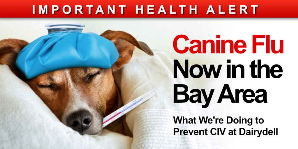 Canine Flu Now in Bay Area