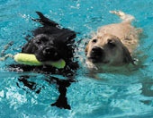 Photo of Swimming Dogs