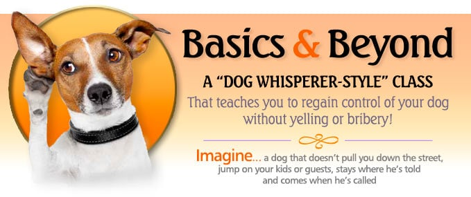Dog Training Classes - Group and Single 2