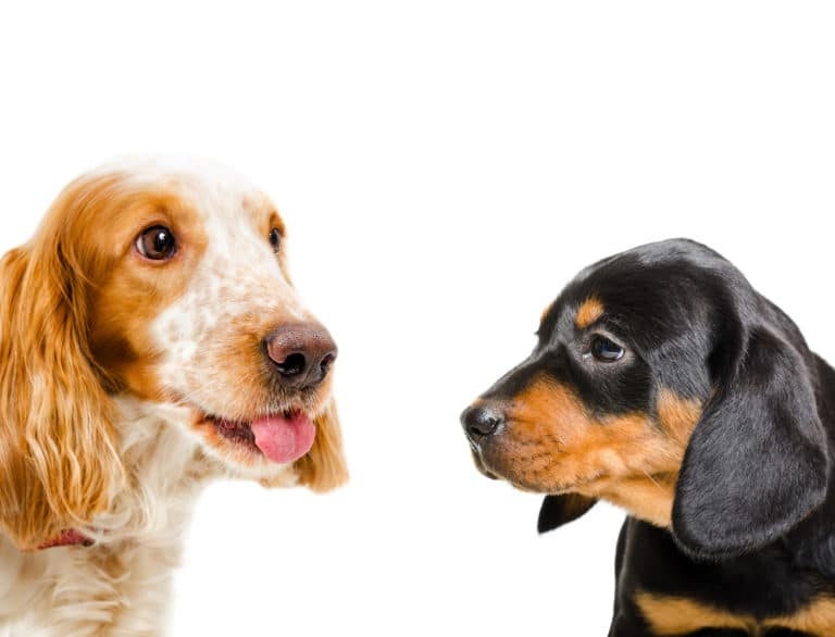 dog socialization photo of two dogs facing each other