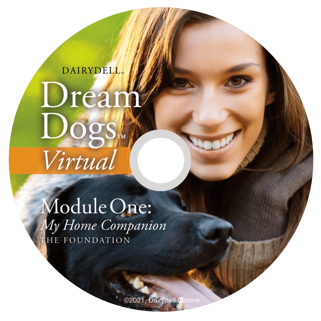 Dream Dogs Virtual Overview 4